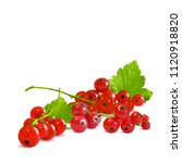 fresh  nutritious and tasty red ... | Shutterstock .eps vector #1120918820