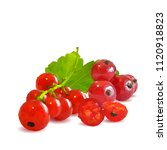 fresh  nutritious and tasty red ... | Shutterstock .eps vector #1120918823