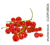 fresh  nutritious and tasty red ... | Shutterstock .eps vector #1120918826