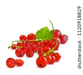 fresh  nutritious and tasty red ... | Shutterstock .eps vector #1120918829