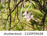 seductive young bride in white... | Shutterstock . vector #1120959638