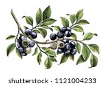 blueberry branch hand drawing... | Shutterstock . vector #1121004233