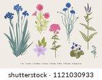 set garden flowers. classical... | Shutterstock .eps vector #1121030933