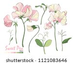 illustration of nature elements.... | Shutterstock .eps vector #1121083646