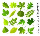 green leaves.natural elemtnst... | Shutterstock . vector #1121097920