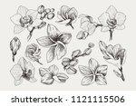 big set of monochrome vintage... | Shutterstock .eps vector #1121115506