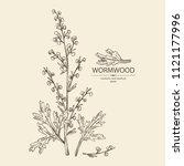 wormwood  wormwood branch ... | Shutterstock .eps vector #1121177996