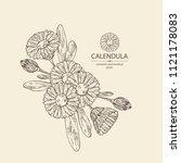 calendula  calendula plant ... | Shutterstock .eps vector #1121178083