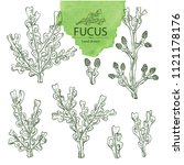collection of fucus  fucus... | Shutterstock .eps vector #1121178176