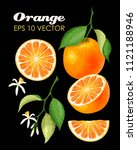 collection of oranges | Shutterstock .eps vector #1121188946