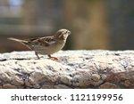 a little bird eats some seeds... | Shutterstock . vector #1121199956