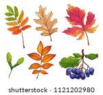 Set of hand painted watercolor leaves, fruits and branches. Isolated objects on white background. Autumn foliage clip art. - stock photo