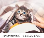 Stock photo a little kitten with blue eyes looks from under the plaid kiten under a blanket in the morning 1121221733