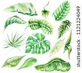 watercolor brush  exotic... | Shutterstock . vector #1121224049