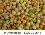 gooseberry fruit background or...   Shutterstock . vector #1121261546