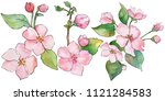 pink cherry blossoms. floral... | Shutterstock . vector #1121284583