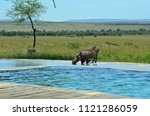 warthog drinking from a pool at ...   Shutterstock . vector #1121286059