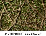 tree root | Shutterstock . vector #112131329