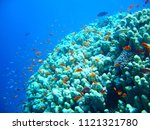 small tropical fish shoal on... | Shutterstock . vector #1121321780