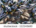 mallard ducks crowded together | Shutterstock . vector #112143683