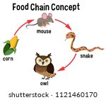 food chain concept diagram... | Shutterstock .eps vector #1121460170