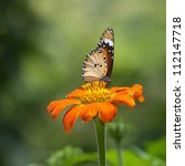 A beautiful butterfly sitting in the flower - stock photo