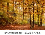 Autumn Forest.forest Road....
