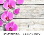 pink purple orchids flowers on... | Shutterstock .eps vector #1121484599