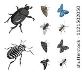 arthropods insect beetle  moth  ... | Shutterstock .eps vector #1121502050