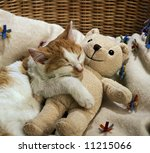 Stock photo sleeping cat with a doll 11215066