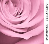 Stock photo close up of pink rose petals 1121543399