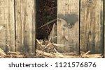 wood texture background | Shutterstock . vector #1121576876