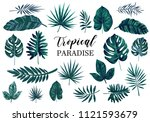 set of different tropical... | Shutterstock .eps vector #1121593679