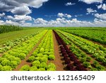 agricultural industry. growing... | Shutterstock . vector #112165409