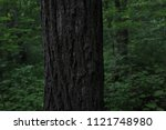 oak tree trunk  close up. dark... | Shutterstock . vector #1121748980