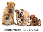 Stock photo group of dogs in front of white background 112177466
