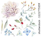 watercolor leaves collection.... | Shutterstock . vector #1121775359