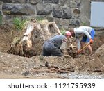 workers  used to dig up tree... | Shutterstock . vector #1121795939