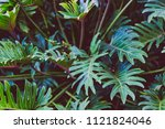 tropical palm trees in sydney ... | Shutterstock . vector #1121824046