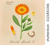 illustration of medicinal... | Shutterstock . vector #1121831336