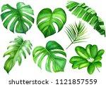 summer set of tropical green... | Shutterstock . vector #1121857559
