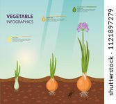 poster with onion growth rate.... | Shutterstock .eps vector #1121897279