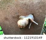 a snail is finding some food | Shutterstock . vector #1121910149