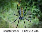 Golden Silk Orb-Weaver Spider, Tanzania, 2006