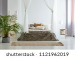 big fresh plant standing on the ... | Shutterstock . vector #1121962019
