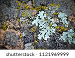 Moss And Lichen Grow On A Stone....