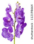 orchid flower branch with buds... | Shutterstock . vector #112198664