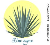 tequila agave plant or blue... | Shutterstock .eps vector #1121999420