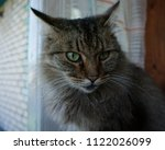 the look of a predatory cat | Shutterstock . vector #1122026099