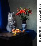Beautiful Gray Cat And  Bouquet ...